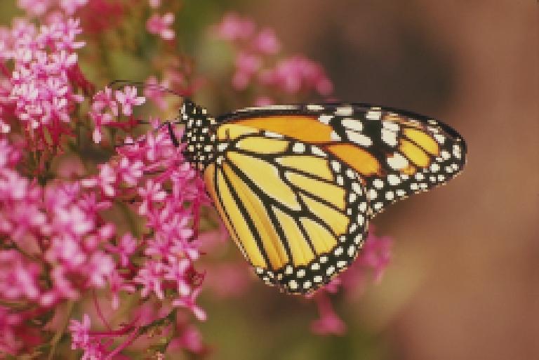 ButterflyLowRes